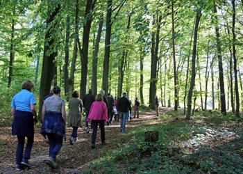 marcheurs dans un forêt
